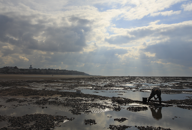 Mussel Picking - Hunstanton