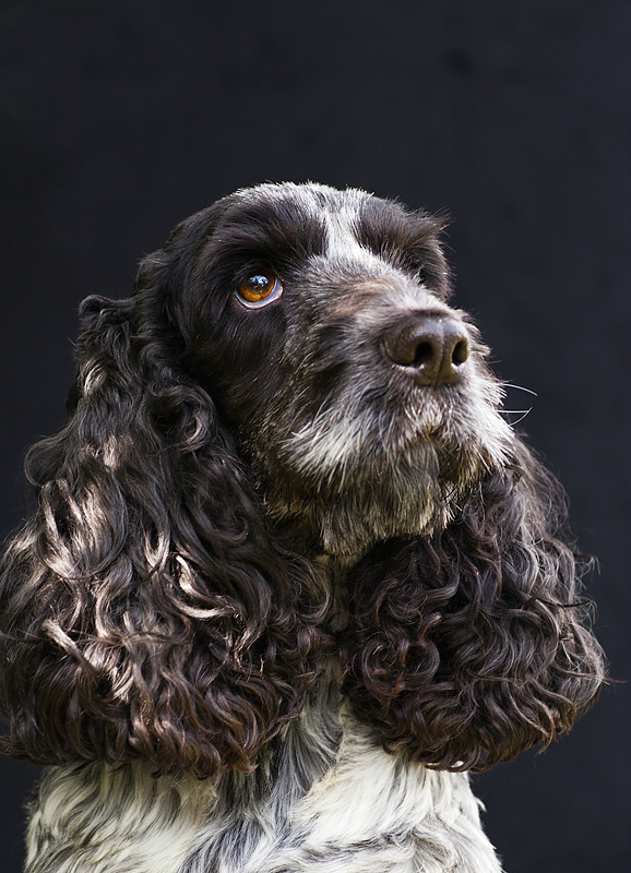 - Dog Photography and other animals.