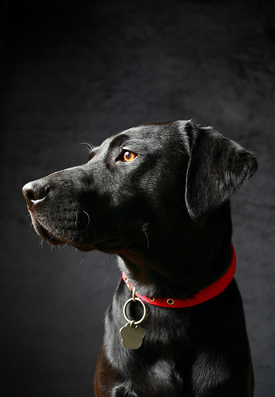 Charlie - Dog Photography and other animals.