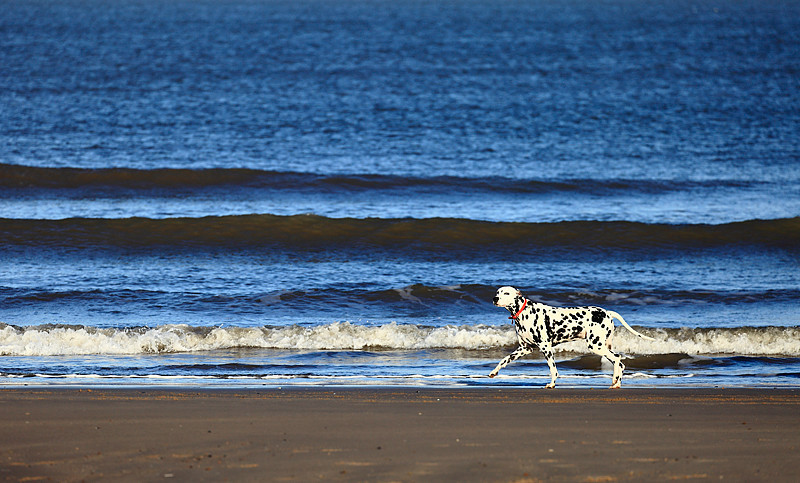 Ruby at Brancaster. - Dog Photography and other animals.