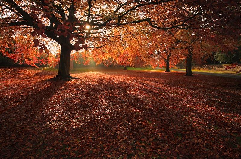 Beech Trees - The Land