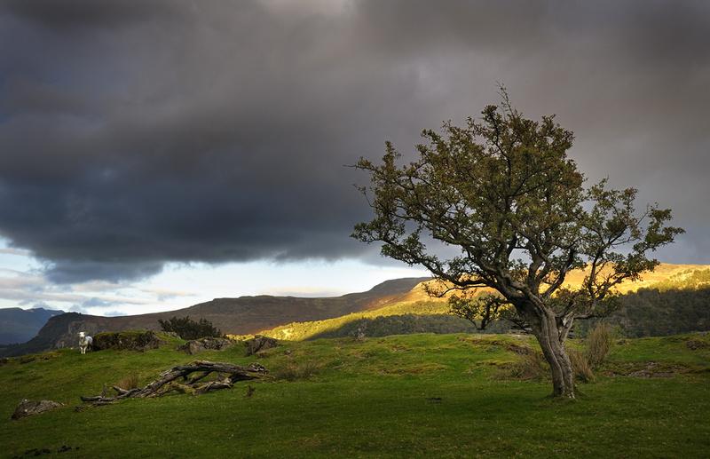 Sheepo - Borrowdale, Cumbria. - Cumbria