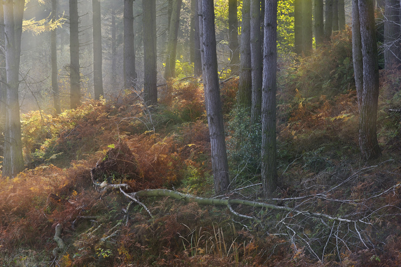 Beneath The Wood - Recent Photographs