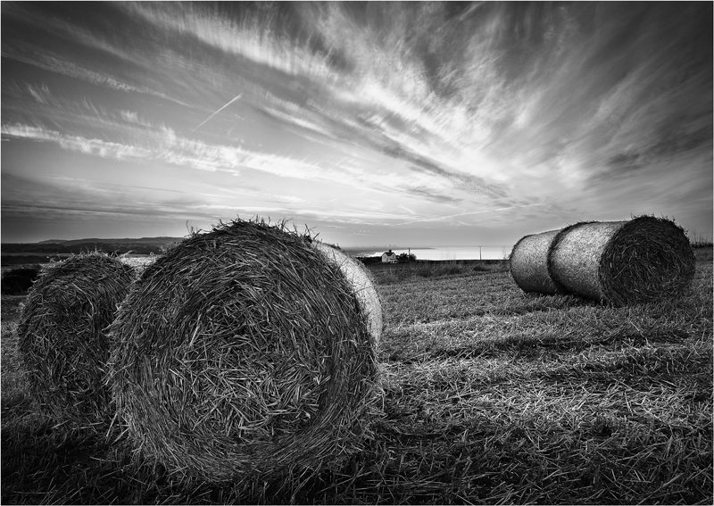 After The Harvest - Monochrome