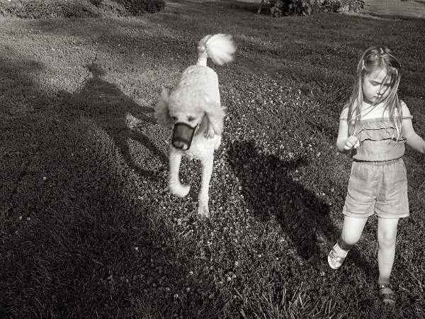 Running with Dogs - THE NATURE JOURNAL