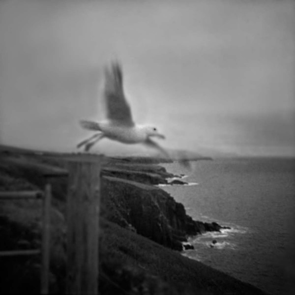 The Gull - SEEING THROUGH THE HEART