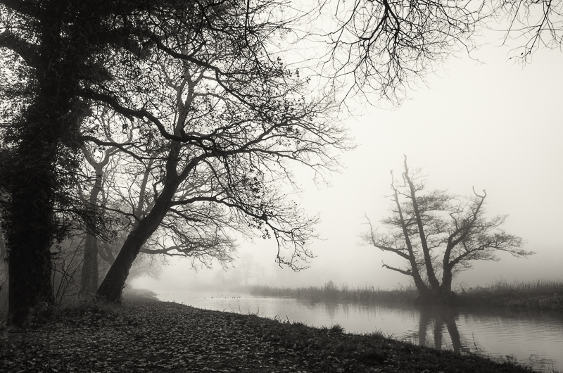 Fog and trees, River Wey, Guildford, Surrey