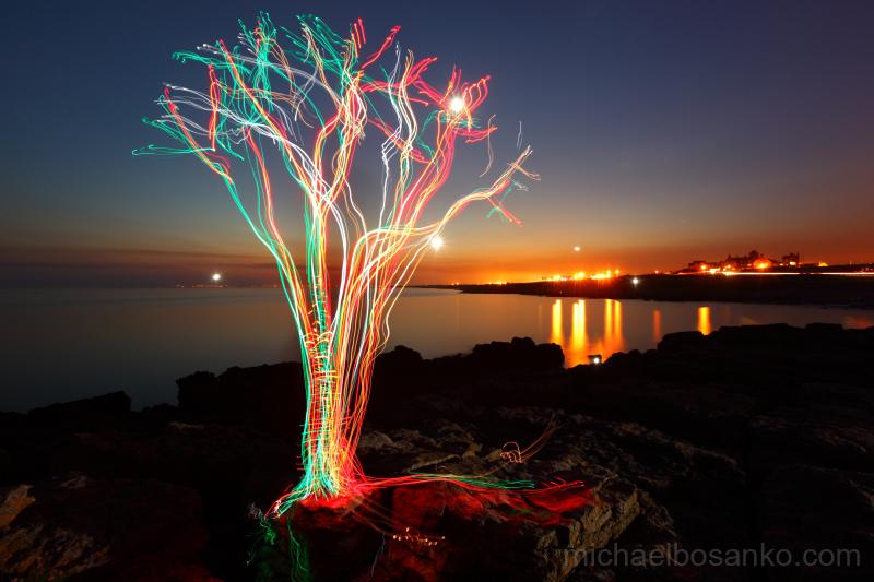 The Tidal Tree - Organic