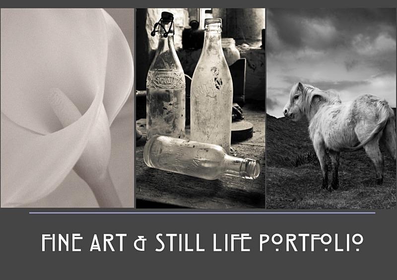 fine art portfolio - Fine Art & Still Life