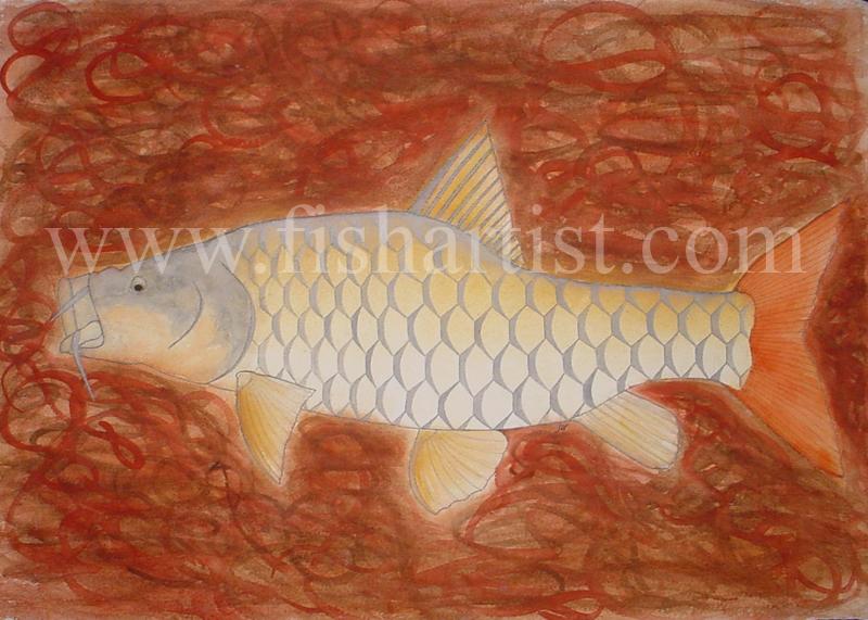 Golden Mahseer - India. - Fish Art for Fishermen.