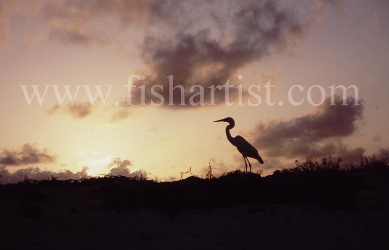 Heron Sunrise. - Eyes of a Fisherman.