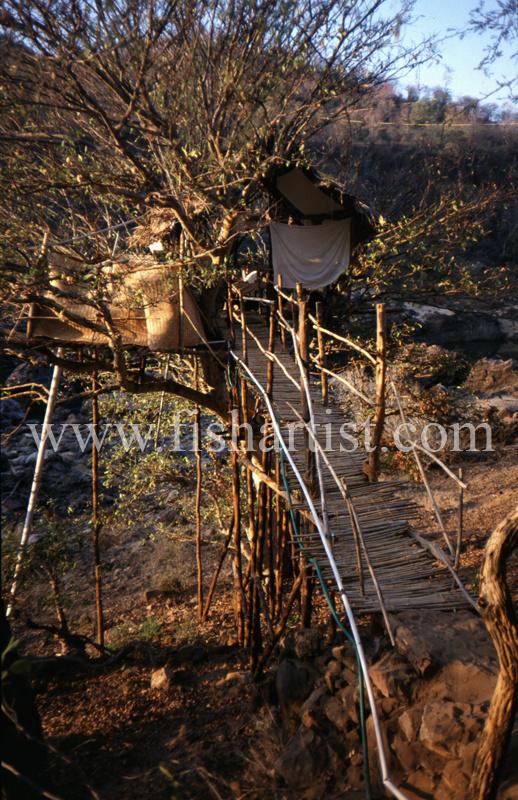 Mahseer Fishermans Treehouse. - Mahseer Fishing India.