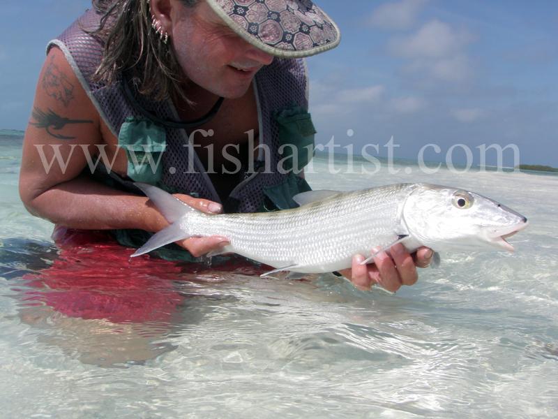 Captured Bonefish 2010. - Bonefishing 2010.