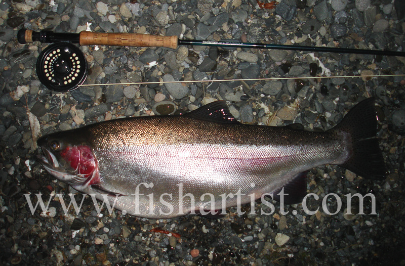 9lb Taupo Rainbow Trout Hen. - Trout Fishing - Taupo New Zealand.