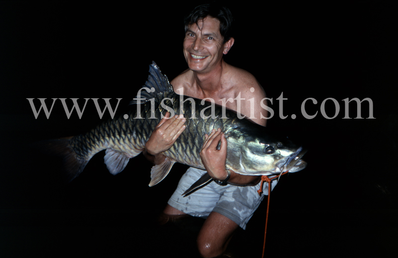 60lb Golden Mahseer. - Mahseer Fishing India.