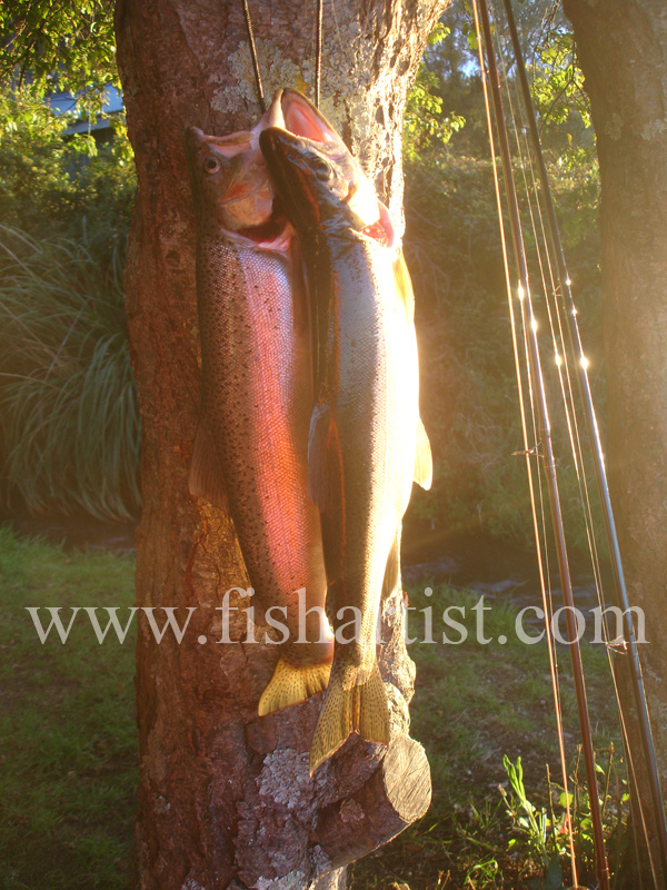 A Brace of Taupo Trout. - Trout Fishing - Taupo New Zealand.