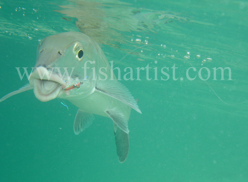 Bonefish Photo - Happy Underwater Bonefish. - Bonefish & Tarpon.