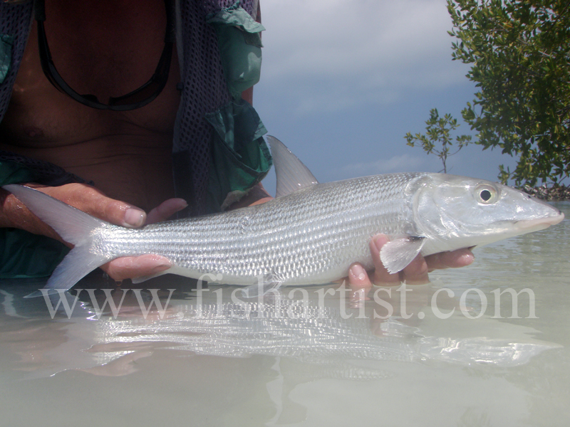 Bonefish Side On 2010. - Bonefishing 2010.