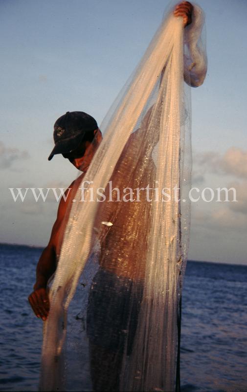 Bait Fisherman. - Eyes of a Fisherman.