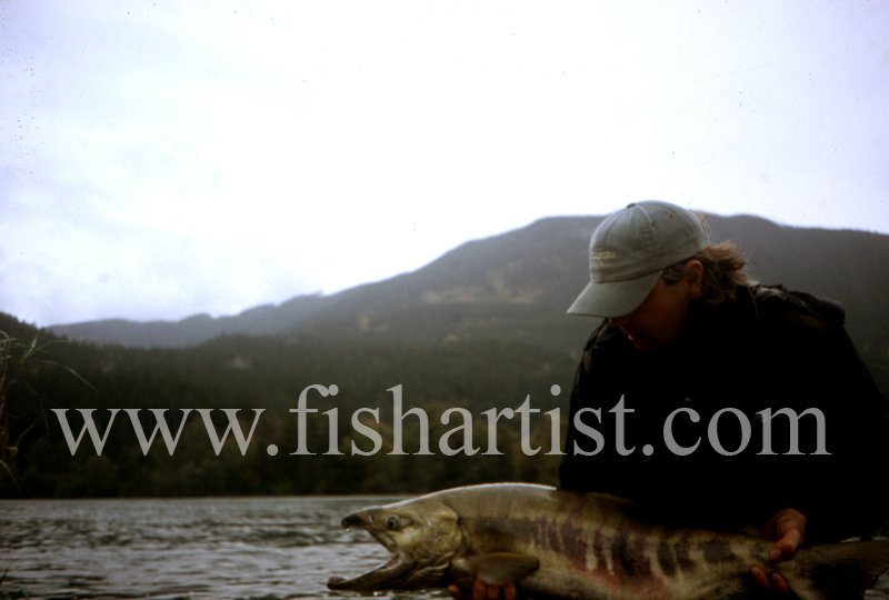 Chum Salmon. - Sturgeon of the Fraser River.