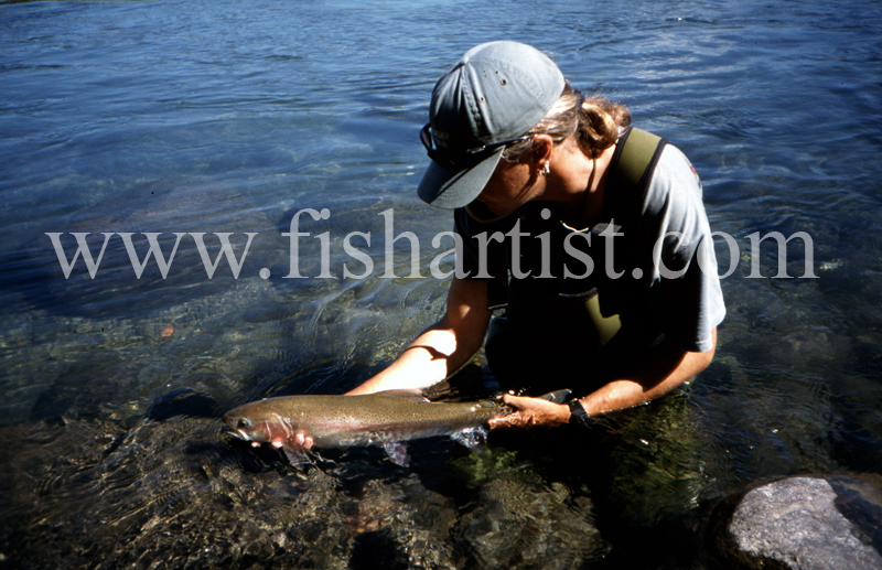 Hydro Release. - Trout of the Tongariro River.