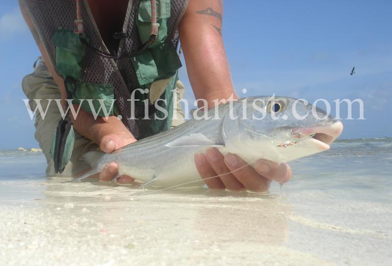 Bonefish Photo - Caught Bonefish. - Bonefish & Tarpon.