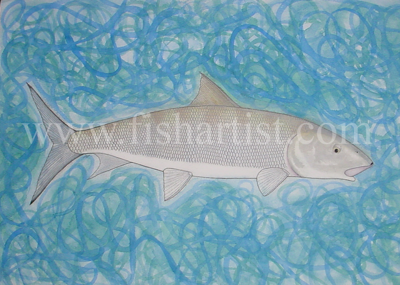 Bonefish of the Flats. - Fish Art for Fishermen.