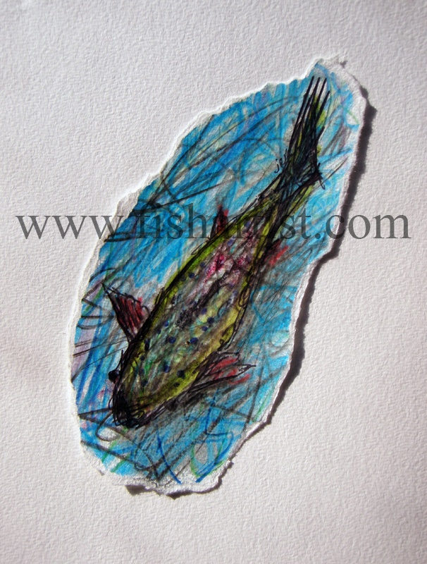Taupo River Rapids Trout. - Watercolours of Taupo Trout.