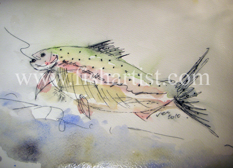 Taupo Hen. - Watercolours of Taupo Trout.