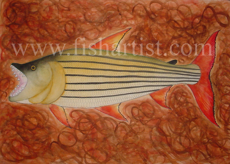 Tigerfish - Zimbabwe. - Fish Art for Fishermen.