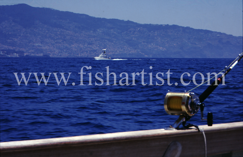 The Hunt is On. - Marlin Fishing.
