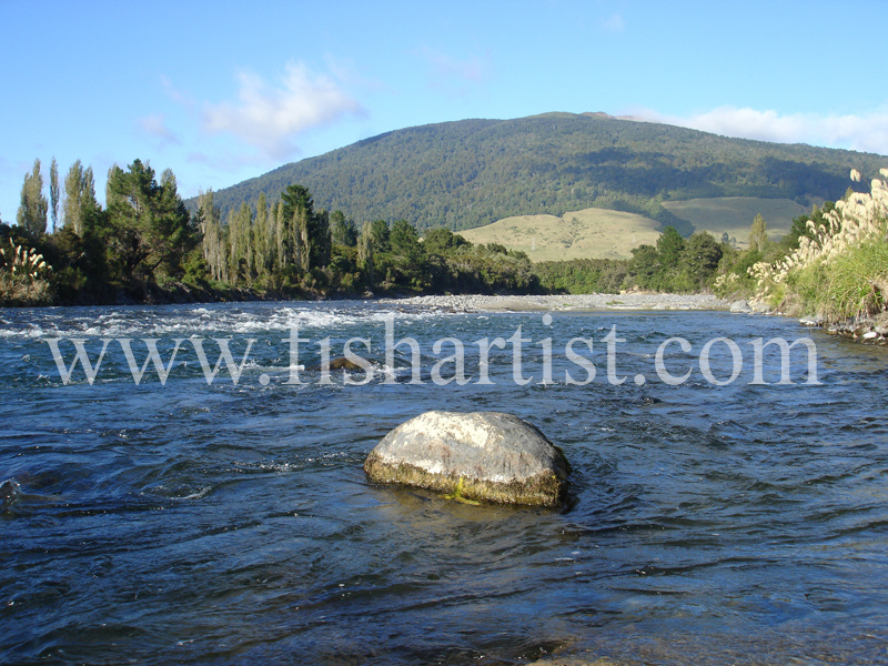 Stag Pool. - Trout of the Tongariro River.