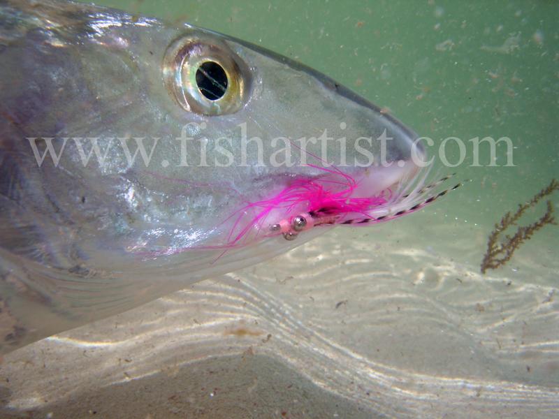 Underwater Bonefish. - Bonefish & Tarpon.
