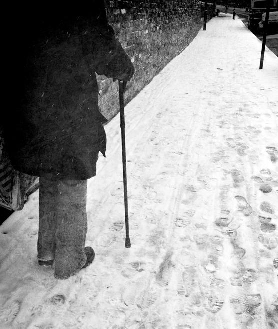 Primrose Hill _ Walking Stick - Winter Snow