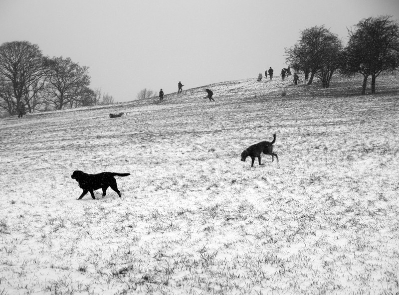 Primrose Hill - Winter Snow_4 - Winter Snow