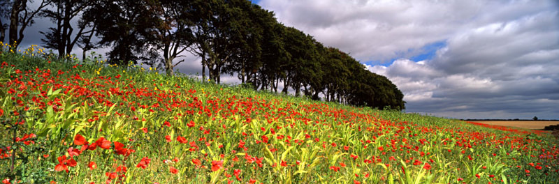 Colour on the Wolds, Fairy Dale - East Yorkshire
