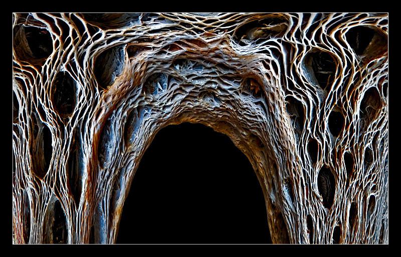 Bone Density - Nature