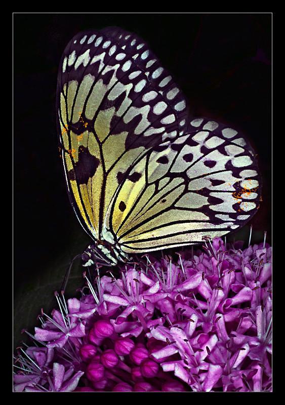 Luminous - Nature