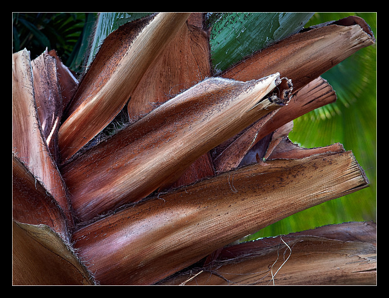 Cut Fronds - Nature