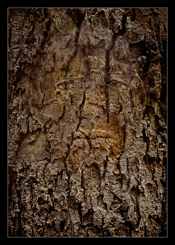 Bark Spirit - Details