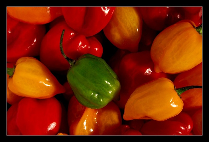 Peppers - Nature