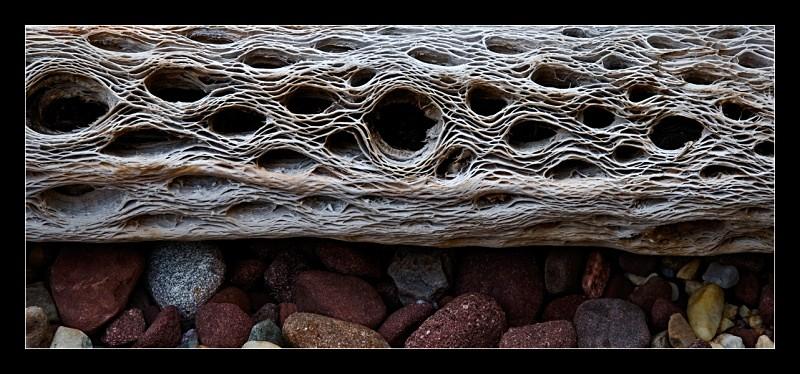 Wood Skeleton - Nature