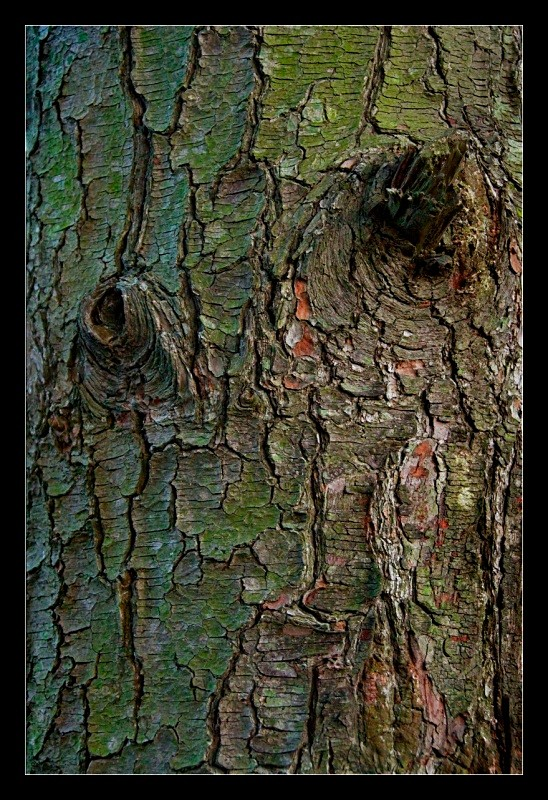 Bark - Nature