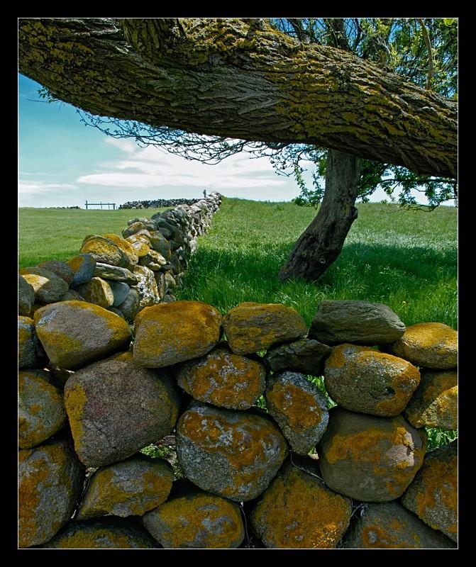 Zigzag Wall - Landscapes