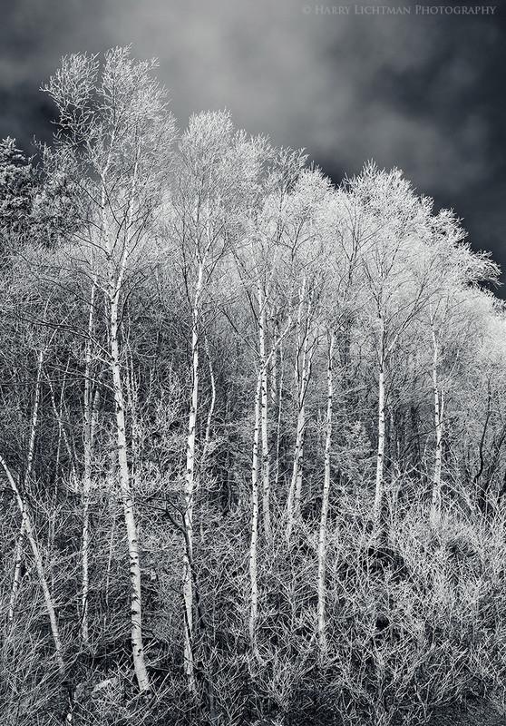 Last Gasp of Winter - Black & White