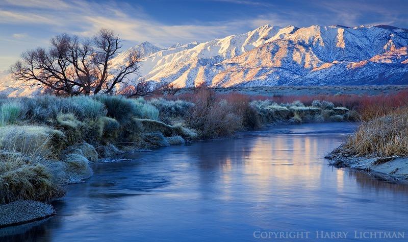 Sierra Frosting - Sierra Nevada