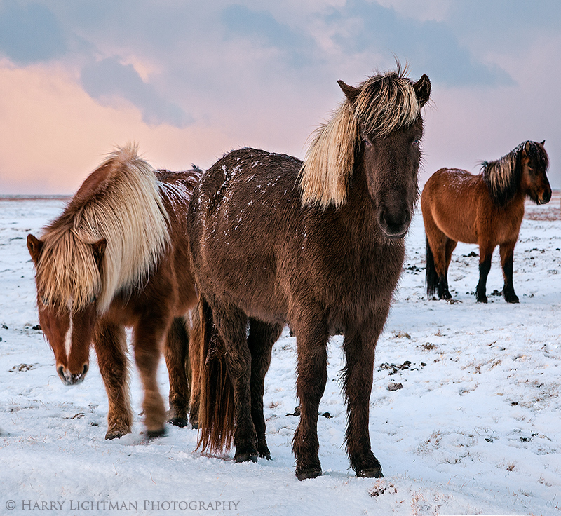 Icelandic Greeters - Iceland Winter