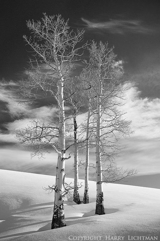Ode to Winter - Black & White