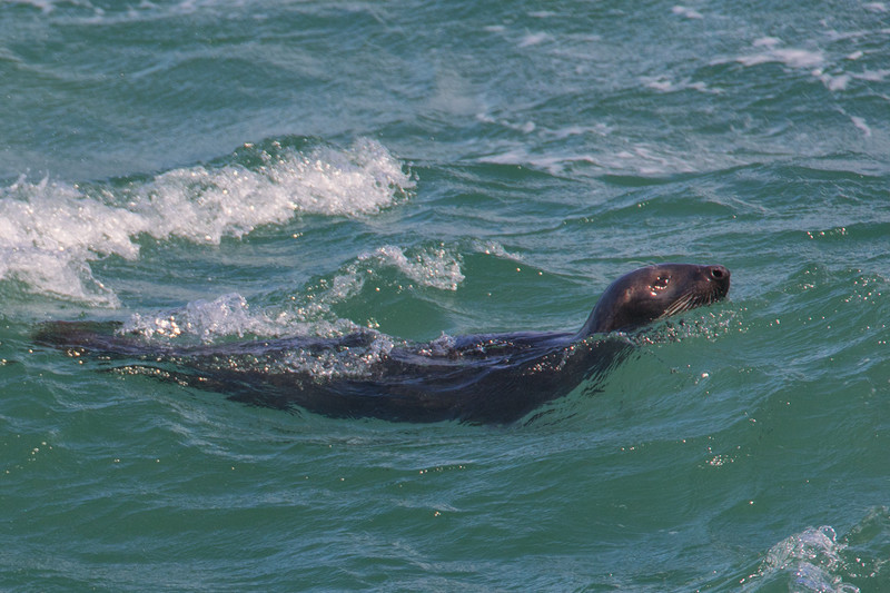 Seal - Wildlife