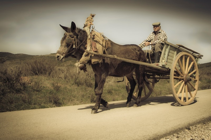Farmer donkey and cart 2-2 - Photojournal